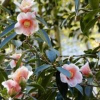 松花堂庭園を訪ねて その2 ~庭園で見かけた植物~