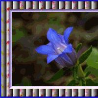 お花の写真を額縁に入れました