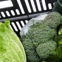 1月の野菜収穫は、白菜 大根 ブロッコリー ミズナ からし菜 ホウレンソウ レタス…