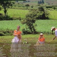 2015年のコスタリカのカレンダー 12  Tico de corazón