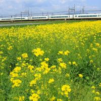 近鉄長島駅近くの菜の花とアーバンライナー(2013年4月27日だよ・・)