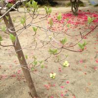 伊藤です。花が咲きました。