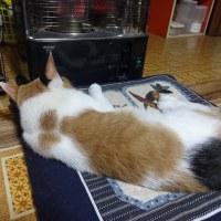 猫の背中にもう1匹?