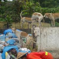 ベトナムの狂犬病は今年すでに49例死亡