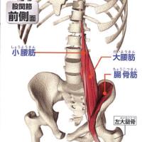 大腰筋の治療方法     金沢市   腰痛   整体院   樹