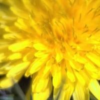 春のイメージ・・・たとえば黄色