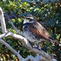 鳥さん0219