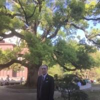 東大構内の巨木