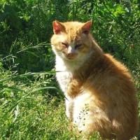 7匹の猫&緑の中で健康体操(^^♪
