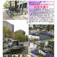 花巡り 「チューリップ 20」  日本大通り 全国都市緑化よこはまフェア