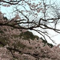 2017京都・さくら巡り(琵琶湖疏水)