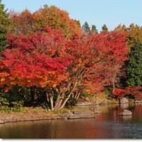 昭和記念公園秋