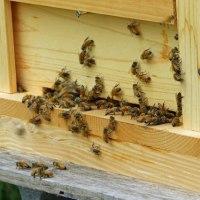 ☆☆☆ 睡眠不足の週末ハ/お見舞い蜂の世話ワンコのお世話など~土曜日・・・