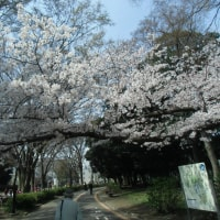 「万朶(ばんだ)の桜か襟(えり)の色」