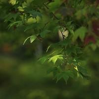 弥彦もみじ谷公園の紅葉