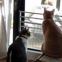 猫と花と団子、お母ちゃんの好きなもの(^▽^笑)