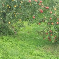 リンゴ狩り~高野町へ