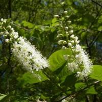 武蔵丘陵森林公園でお花見です