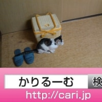 2016/08/28(13:26:00)写真 籠の前の猫H