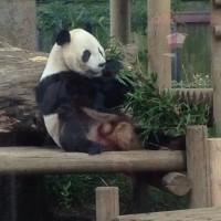 上野動物園🐼🐯🐘