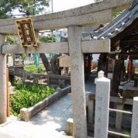 卯の花(住吉大社)・浜寺バラ公園