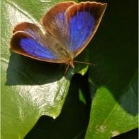 紫小灰蝶、黄立羽蝶、姫星亀虫、猫蝿取蜘蛛など