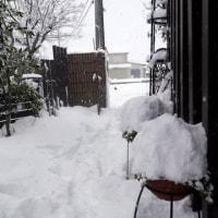 雪は~降る~♪