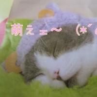 親心♡ いらぬお世話ヨ! 子羊狆((+_+))
