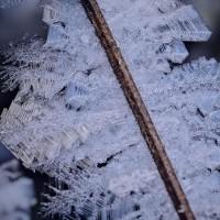 170107_木下沢-3 <霜の華-2>