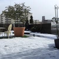 記録的な大雪であちこちに雪だるまが‼️子供は大喜び🎶雪合戦も・・・