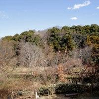 泉の森ー自然観察センター・しらかしのいえ