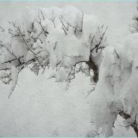 大雪が降りました。