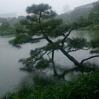 文化財 清澄庭園に行く