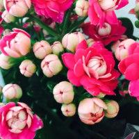 レッスンの花!
