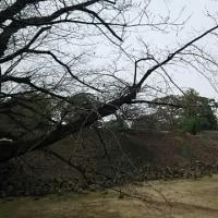 熊本城、20年と600億