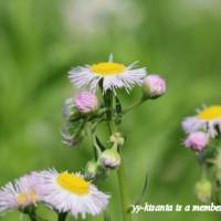 空き地の雑草刈り