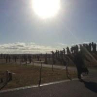百里基地航空祭の前日予行を見学してきました ('16.11.26)