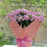 母の日プレゼントの花2