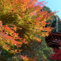 紅葉の間に佇む三重塔