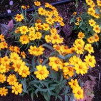 2006-10-27花の美術館01