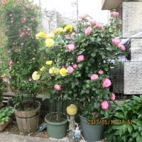 2017.5.15(月)『しずく』 の 誕生会