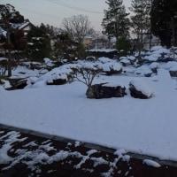 今年は雪・少なし(今のところ)
