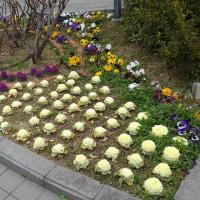 豊中市役所前の花壇