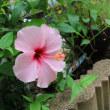 夏のお花と奈々