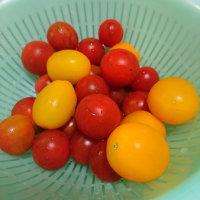 今年のトマトはすごかったー!