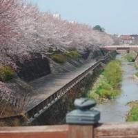 東京の桜も終わりを。