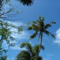 サイパン49日目の風 マニャガハ上陸 メローないい風でした