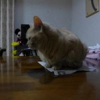 ネコはミステリーがお好き?