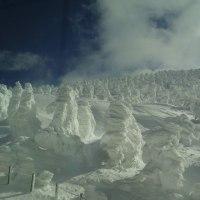 ★樹氷が残っていました❗