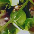 庭の歳時記 2017夏 vol.2